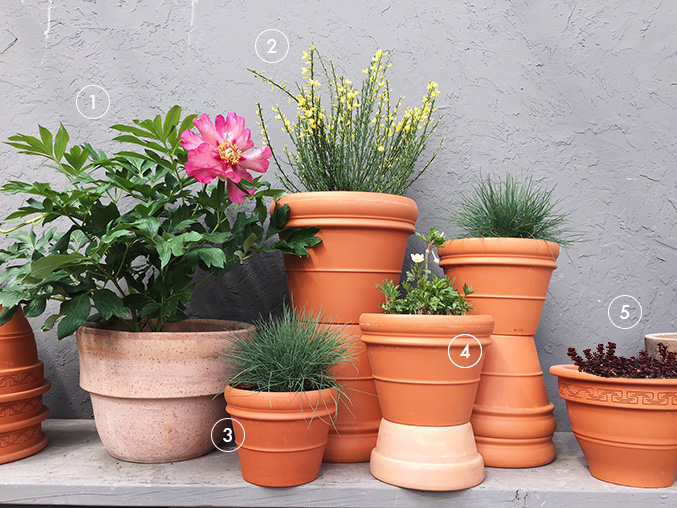 Make a container garden with these 5 full sun plants