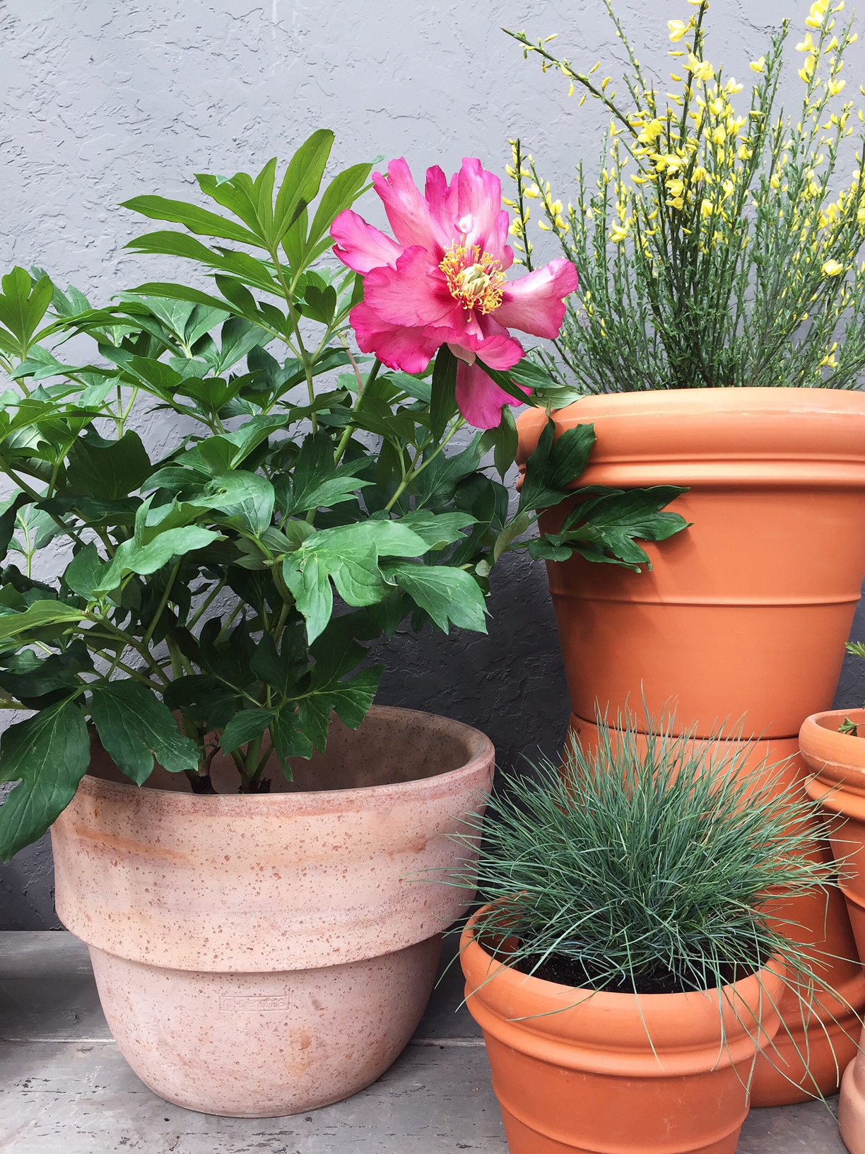 Make a container garden - Container gardens for sun ...