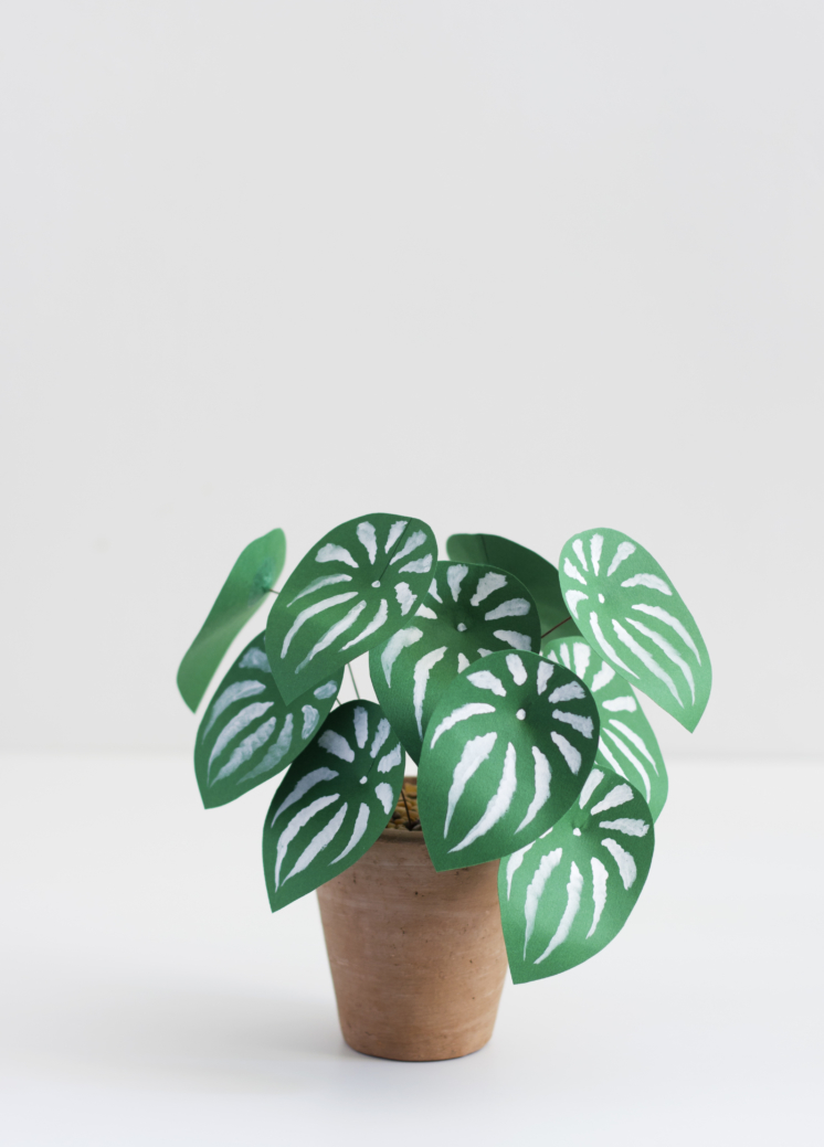 houselarsbuilt_paperplant_watermelonpeperomia_8
