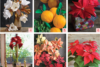 15 holiday flower tutorials