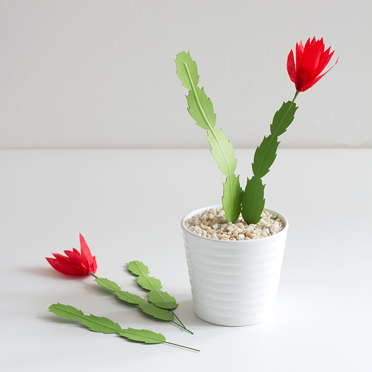 paper_christmas_cactus_gravel_and_plants