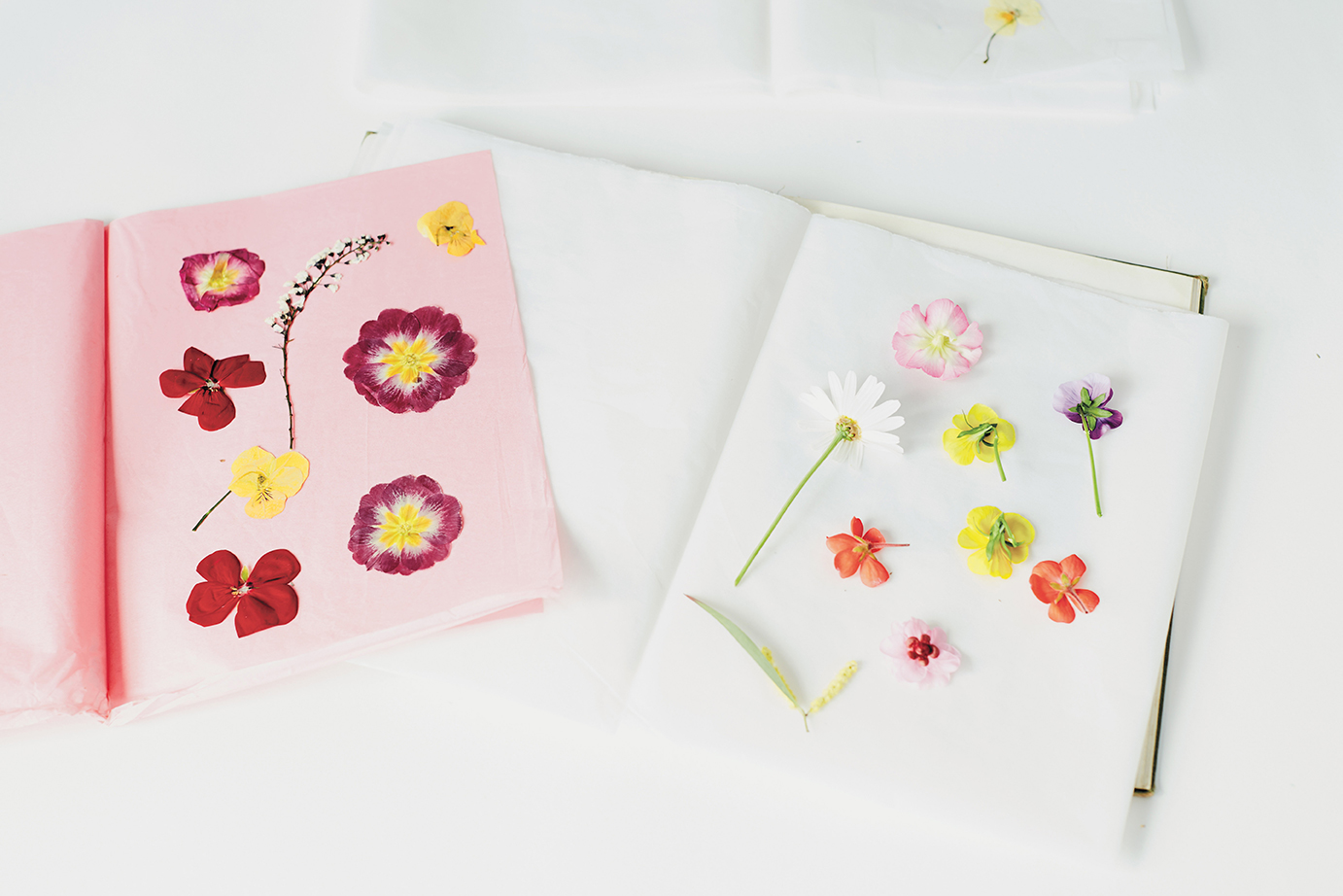 How to press flowers in 3 methods the house that lars built method 1 pressing in a book mightylinksfo