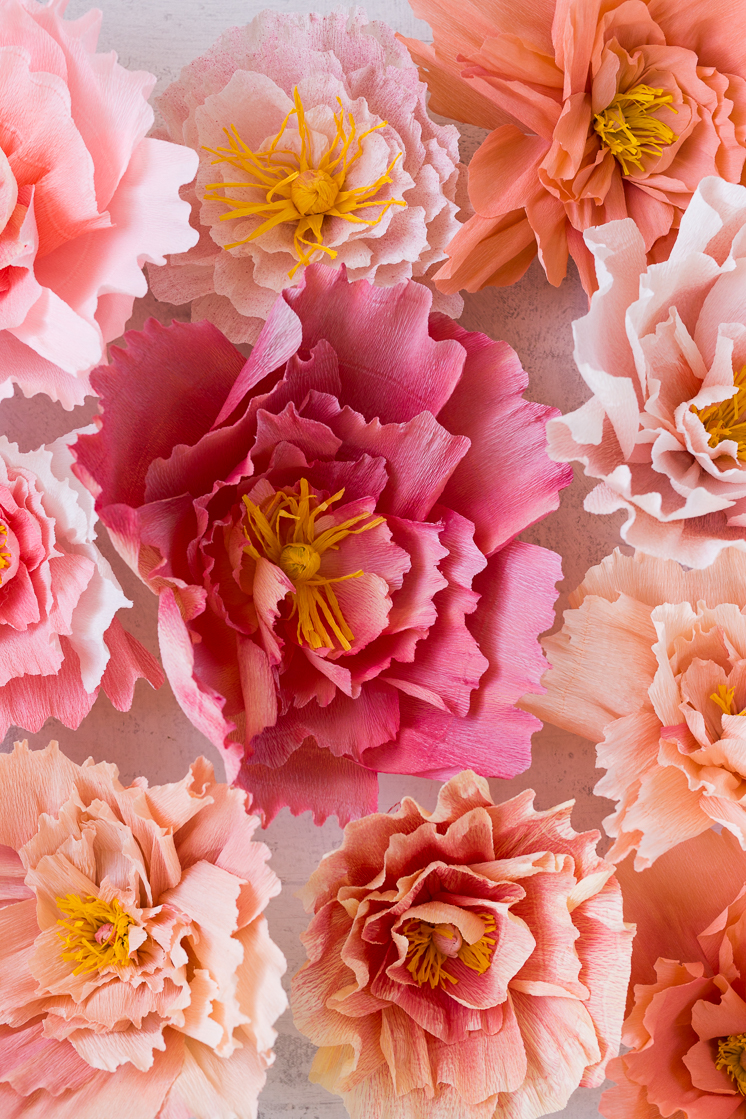 Crepe paper peony wall the house that lars built crepe paper peony wall mightylinksfo