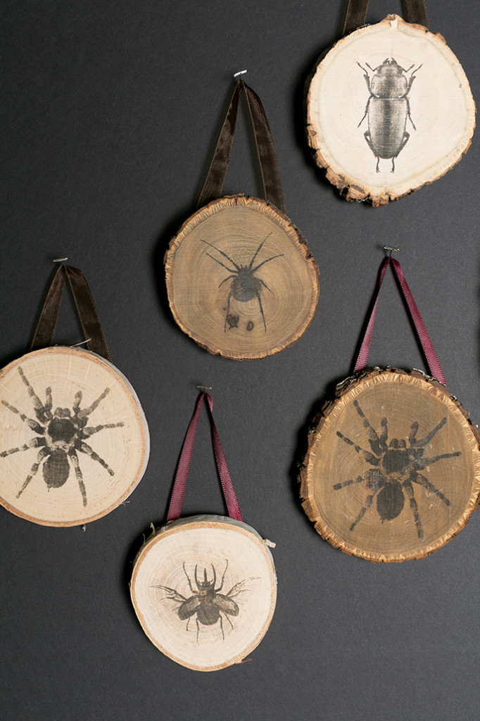 wooden cross sections of branches with spiders and bugs transferred onto them hanging from maroon ribbons.
