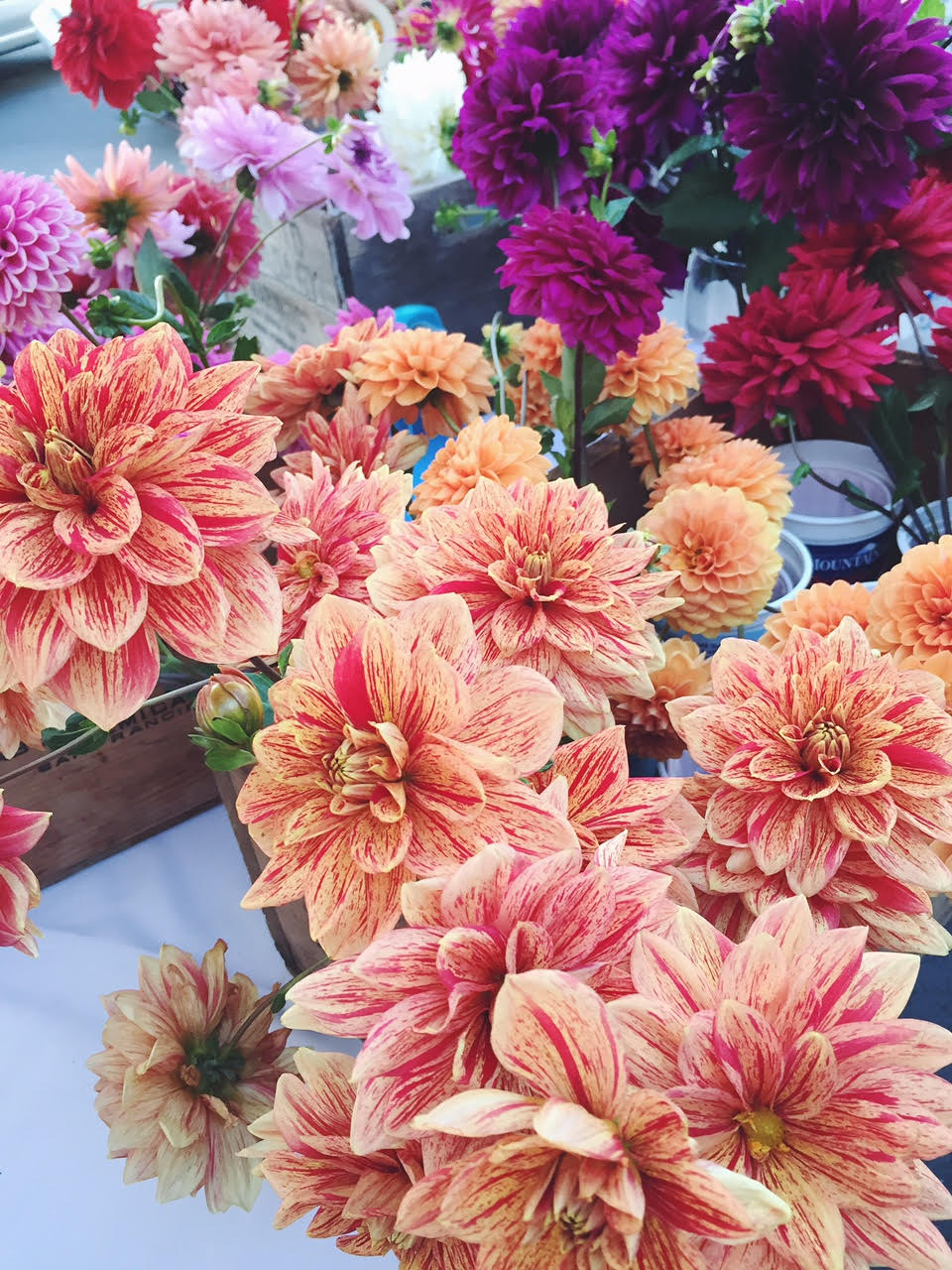 Dahlias at the farmer's market