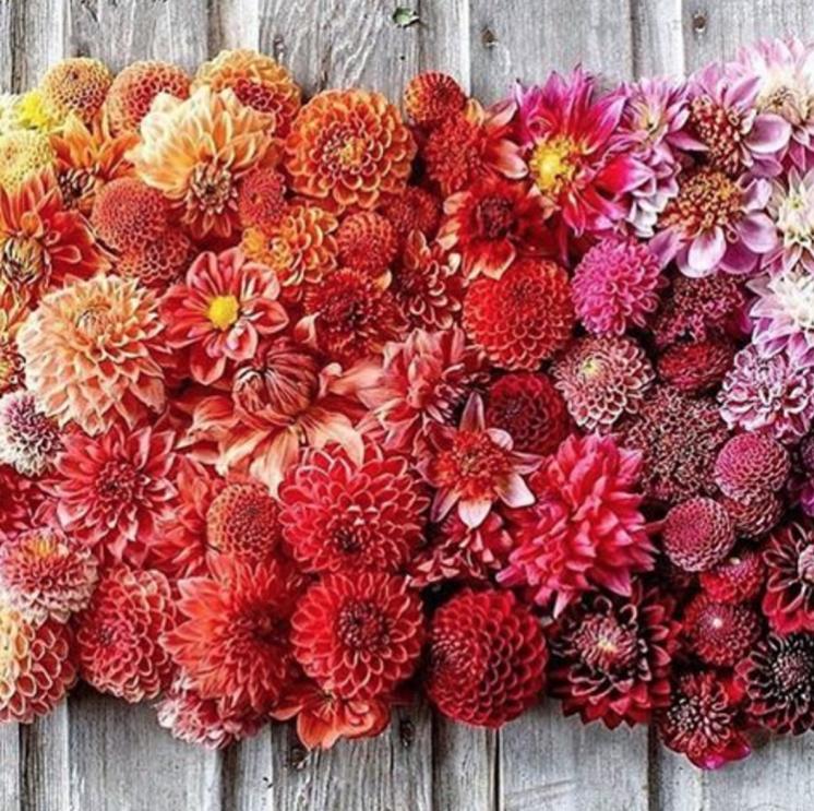 floret-flowers