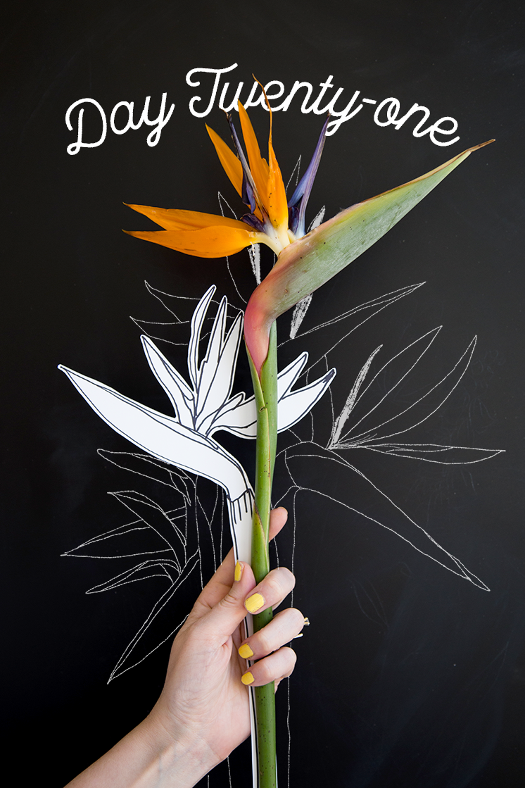 It is an image of Agile Bird Of Paradise Drawing