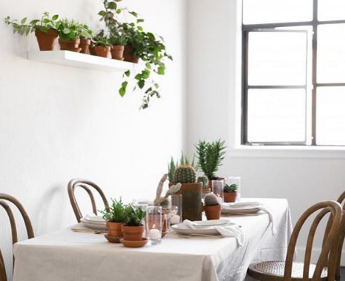 Gardeners to follow on Instagram