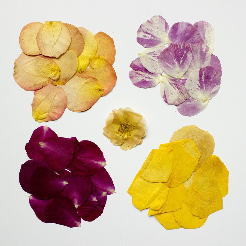 pressed-flower-tray-diy-2