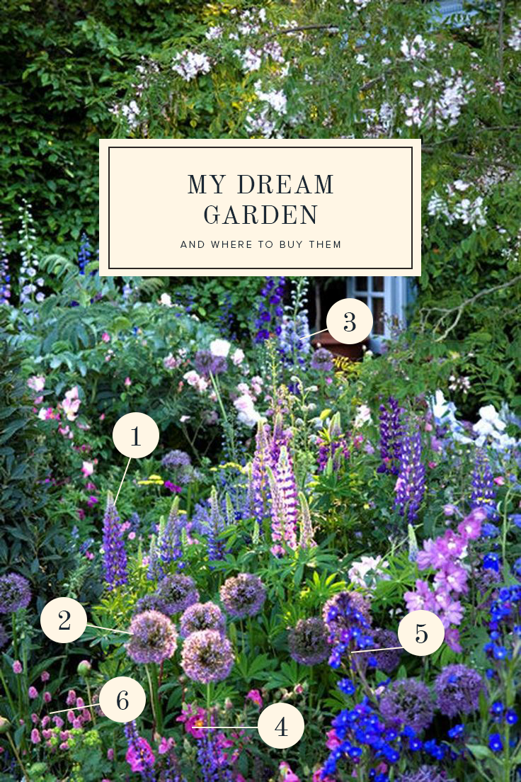 Dream gardens and where to buy them