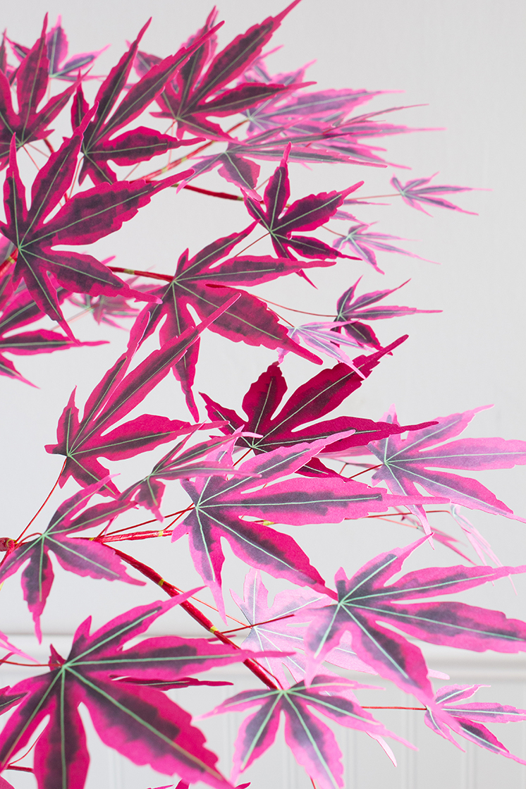 DIY Paper Japanese maple tree