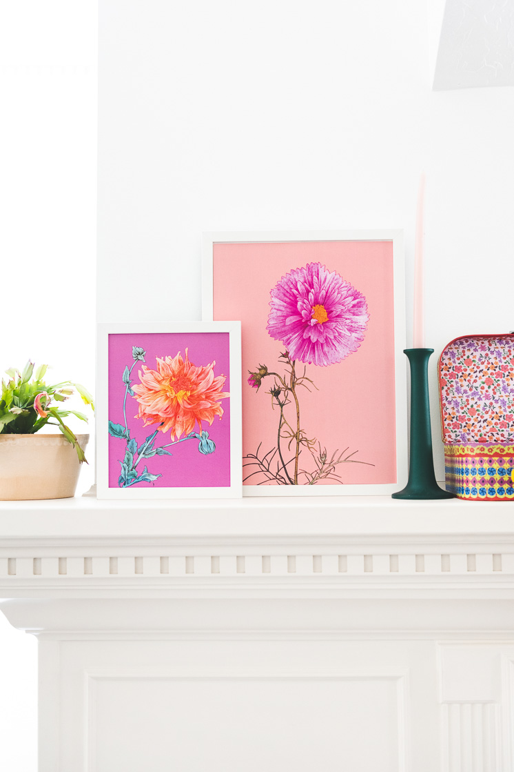 Flower art prints by Adriana Picker