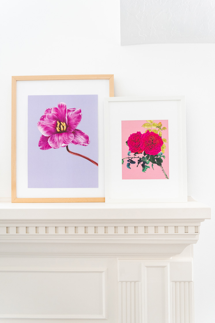 Dahlia art print by Adriana Picker