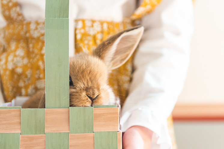 a wheat-colored rabbit peeks over the top of a paper Easter basket