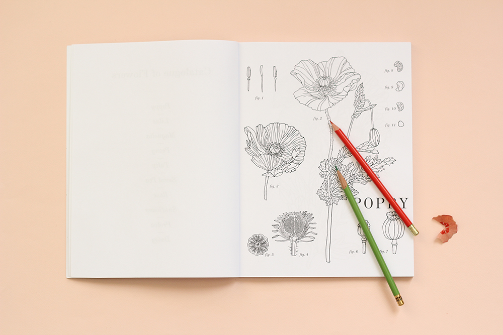 picture of a coloring page with a red and green colored pencil on top.