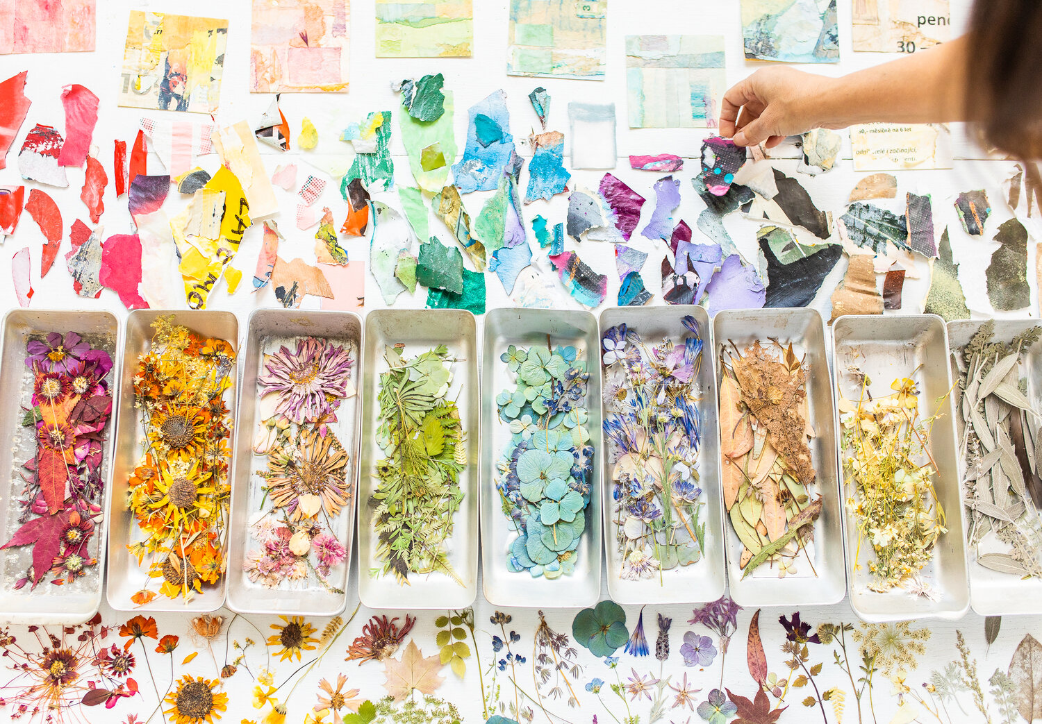 Tricia Paoluccio picks up a pressed flower from color coded trays in a light-filled room