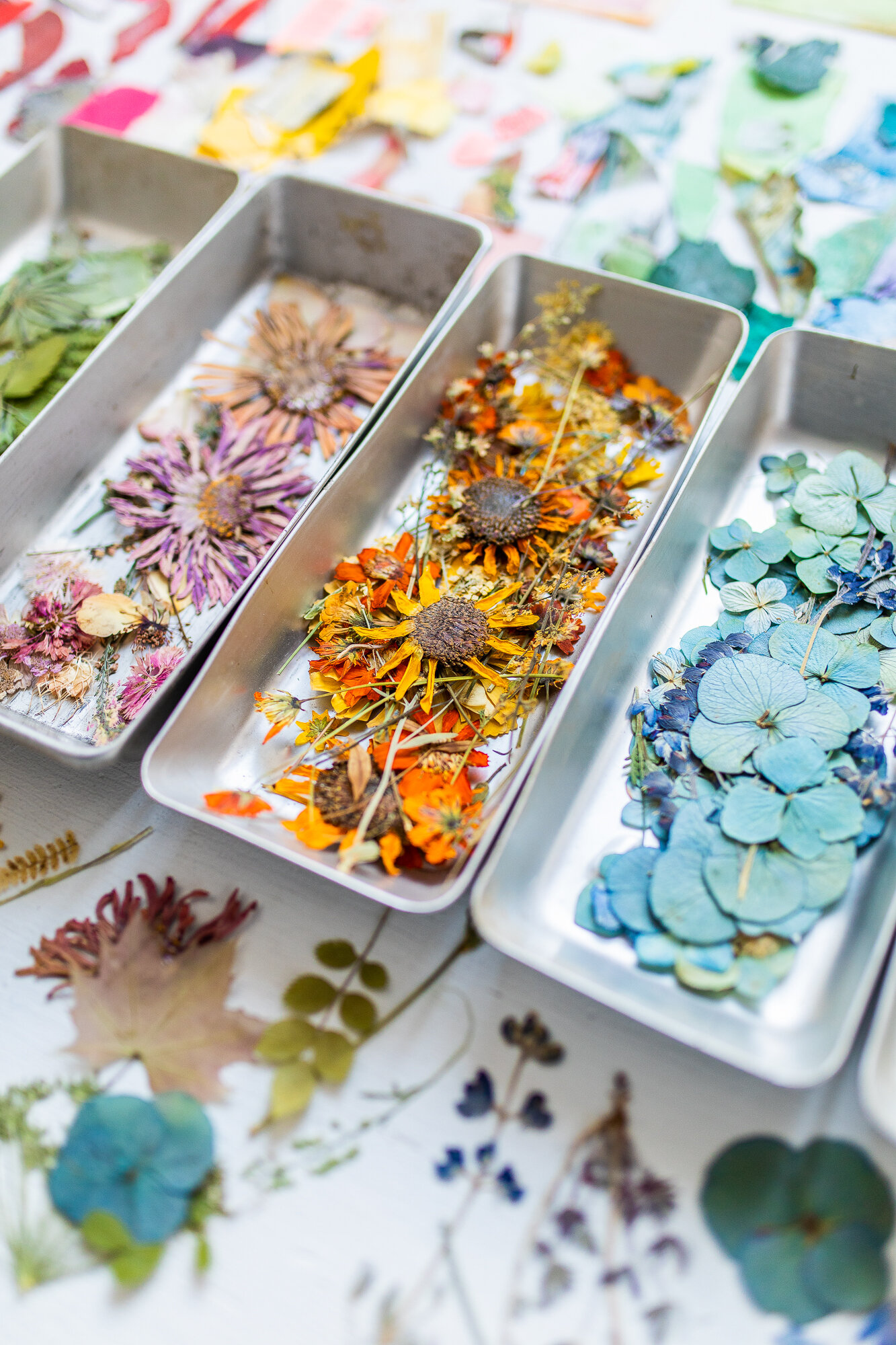 Color-coded trays of pink, orange, and blue pressed flowers