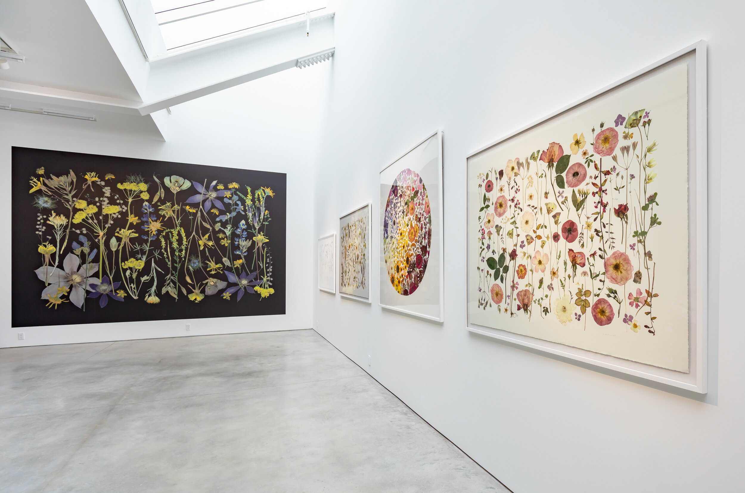 Installation shot of large botanical floral prints in a gallery