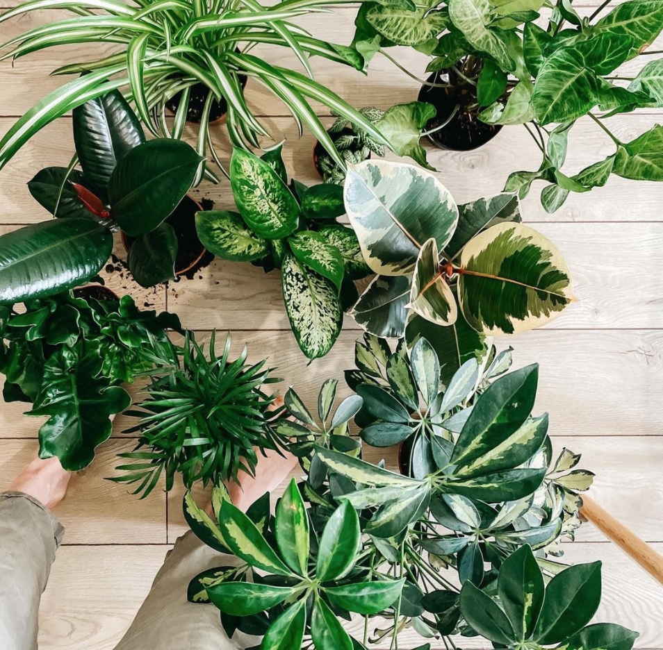a variety of potted houseplants
