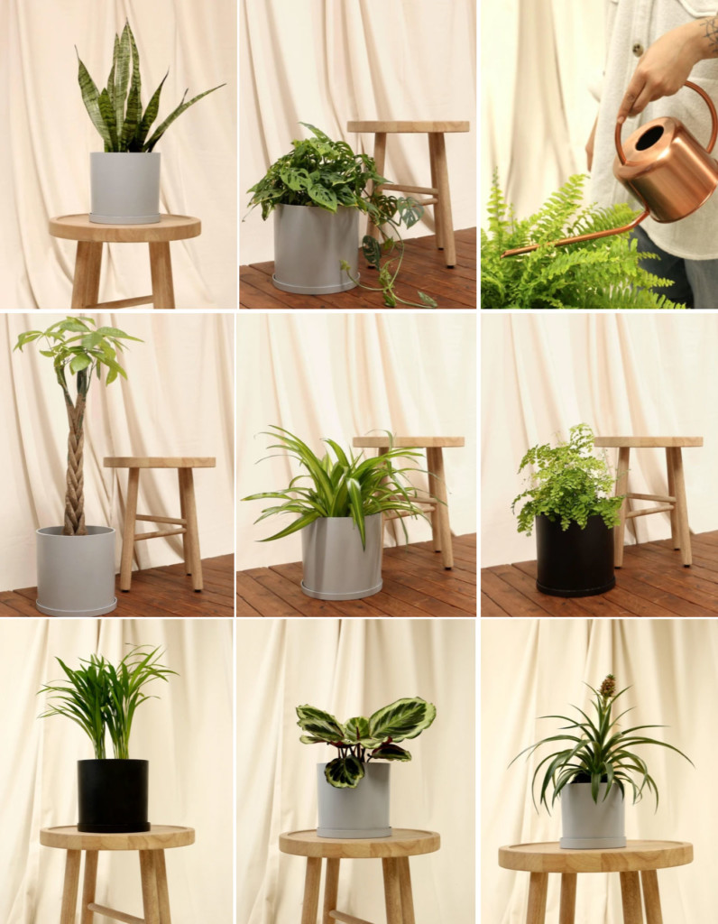 pre-potted plants Tranquility