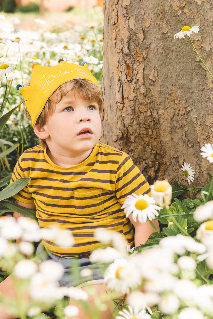 Jasper wears his yellow Flower Lane crown and sits in a field of daisies.