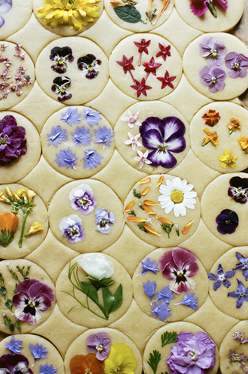 Rolled out cookie dough with colorful pressed flowers pressed onto each round circle of dough.